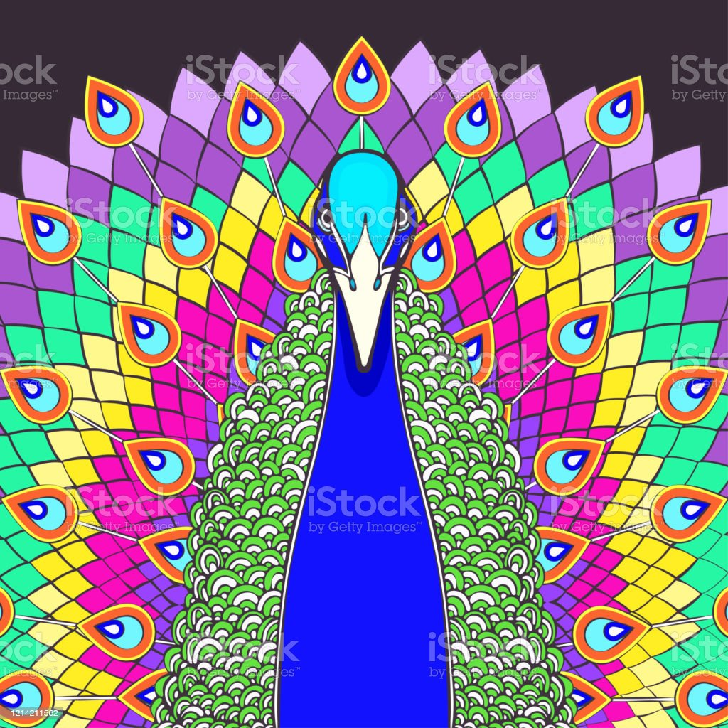 peacock with flowing tail colorful cartoon drawing front view beautiful multicolor bird with big open rainbow tail with peacock bright feathers isolated on dark background vector illustration stock illustration download image peacock with flowing tail colorful cartoon drawing front view beautiful multicolor bird with big open rainbow tail with peacock bright feathers isolated on dark background vector illustration stock illustration download image