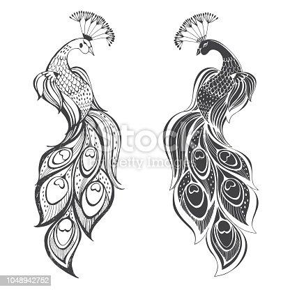 Peacocks. Hand drawn vector illustration, sketch. Elements for design.