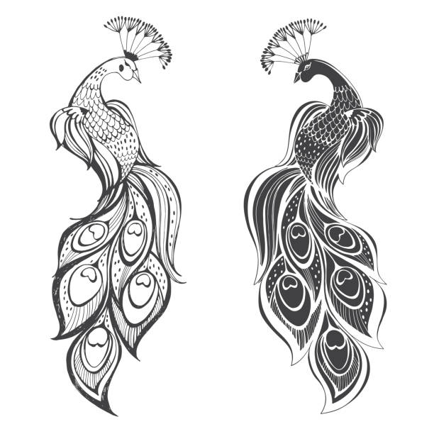 peacocks. vector illustration, two variants. isolated elements on white background. - peacock stock illustrations