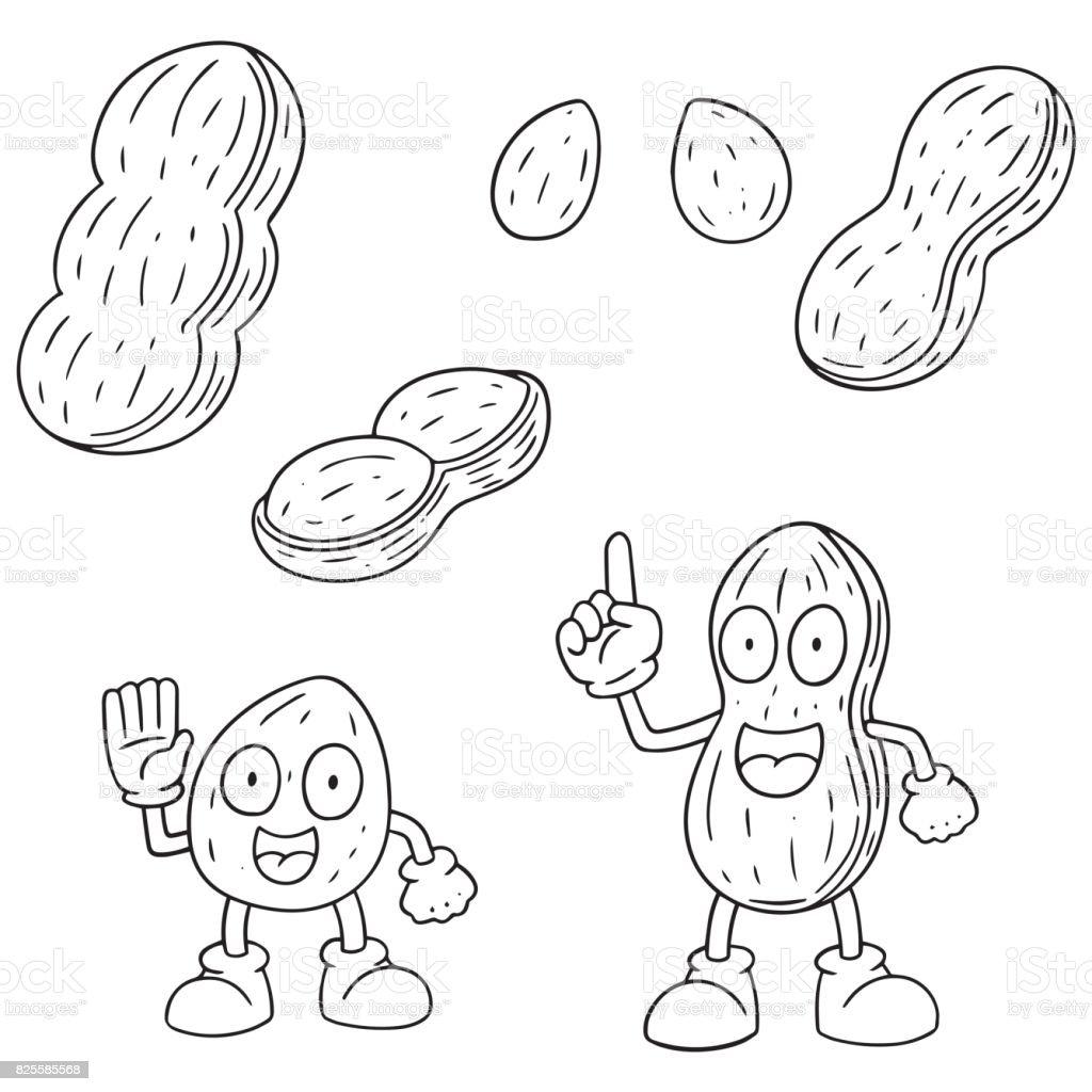 peanut vector art illustration
