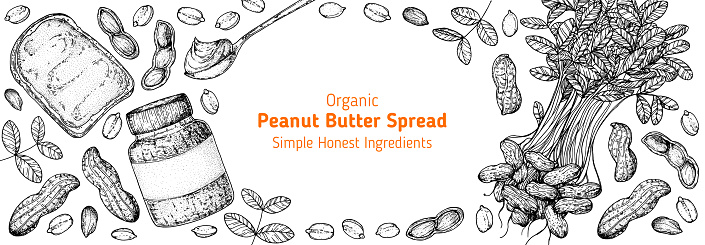 Peanuts and ingredient for peanut butter sketch. Breakfast for energy. Hand drawn vector illustration. Design template. Vegan food. Peanut nut butter set.