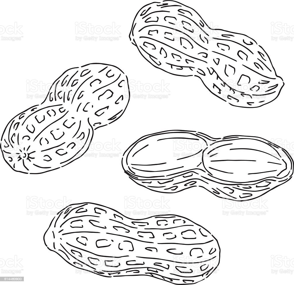 Vector Drawing Lines Examples : Peanuts drawing stock vector art istock