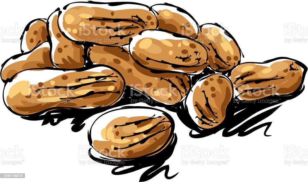 Desenho de amendoim - ilustração de arte em vetor