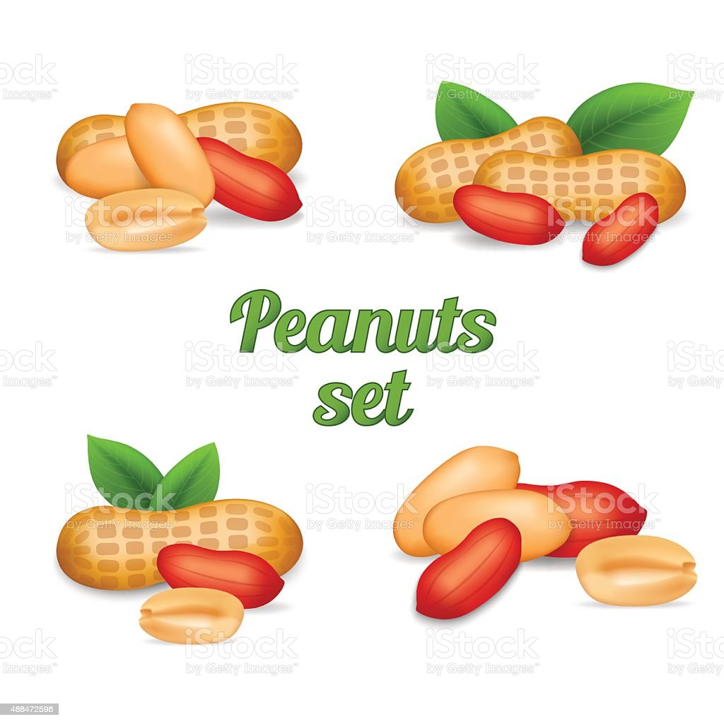 Peanuts isolated on white vector art illustration