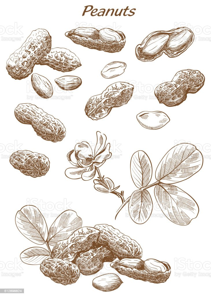 peanuts set of sketches vector art illustration