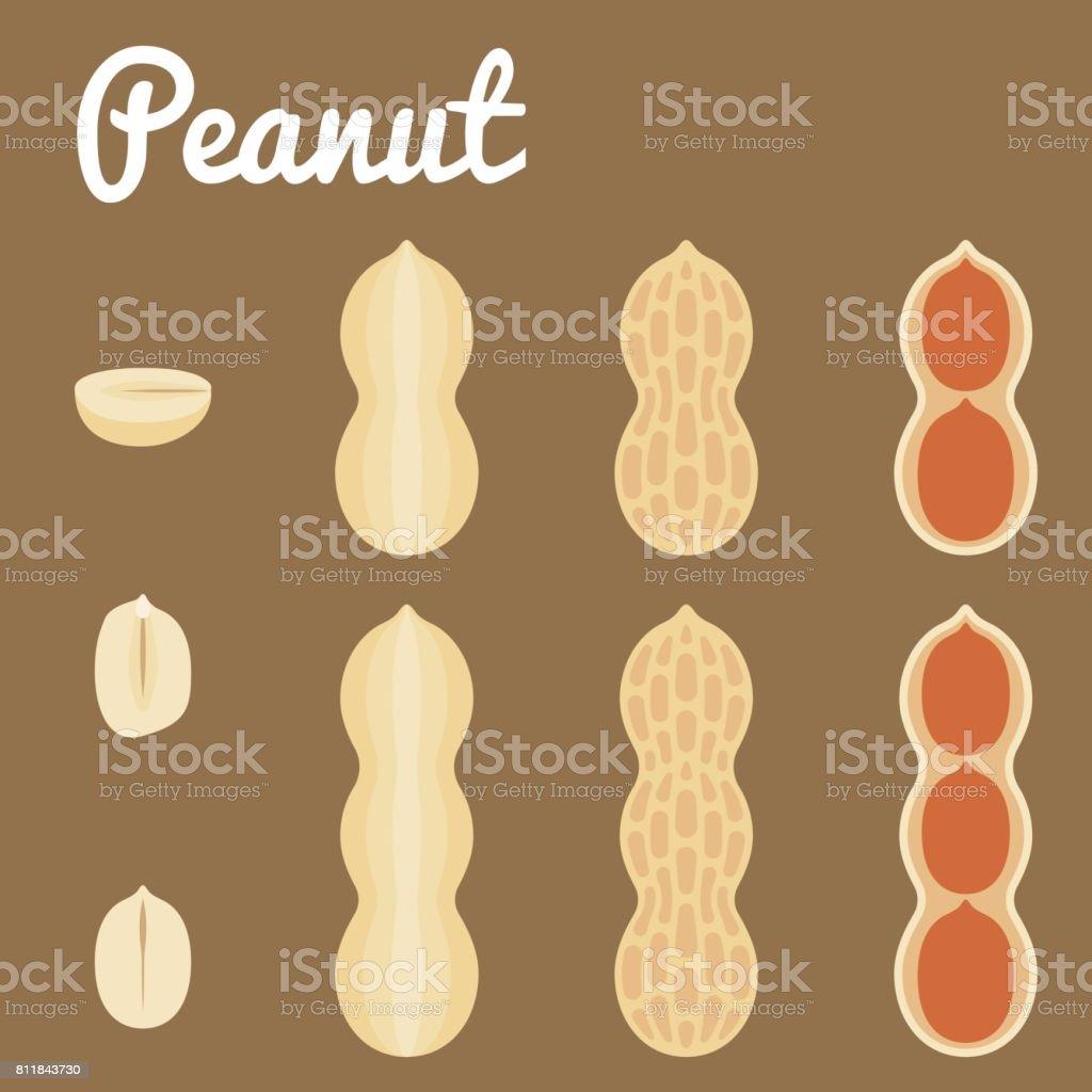Amendoim - ilustração de arte em vetor