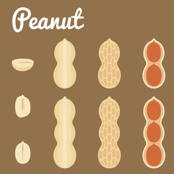 Peanuts – artystyczna grafika wektorowa