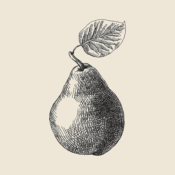 Birne Zeichnung – Vektorgrafik