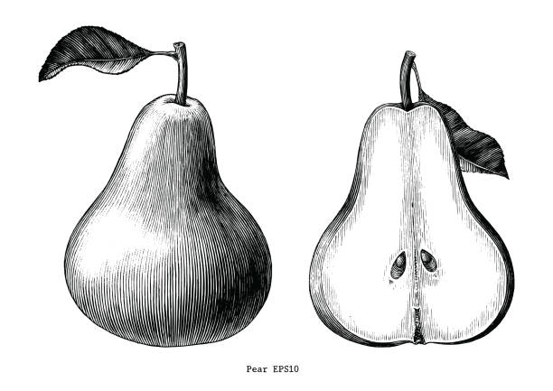 Best Pears Illustrations, Royalty-Free Vector Graphics