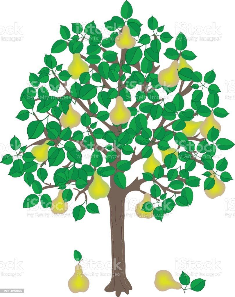 pear tree ilustración de pear tree y más banco de imágenes de agricultura libre de derechos
