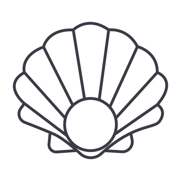 pearl shell vector line icon, sign, illustration on background, editable strokes - scallop stock illustrations, clip art, cartoons, & icons