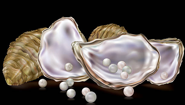 Pearls in the oyster shell vector art illustration