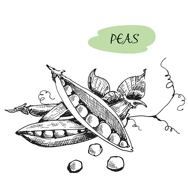 peas. hand drawn illustration - like two peas in a pod stock illustrations, clip art, cartoons, & icons