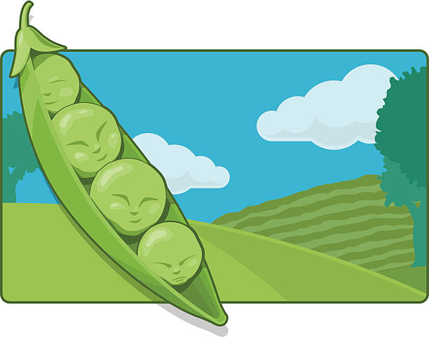 peas in a pod (vector and raster) - like two peas in a pod stock illustrations, clip art, cartoons, & icons