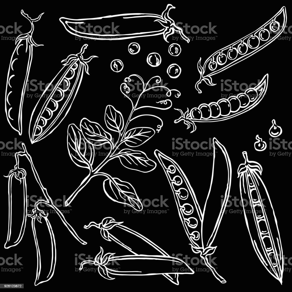 Ilustración de Vectores Vegetales Guisantes y más banco de imágenes ...