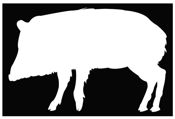 peccary silhouette - javelina stock illustrations