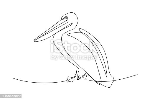Pelican in continuous line art drawing style. Black linear sketch on white background. Vector illustration