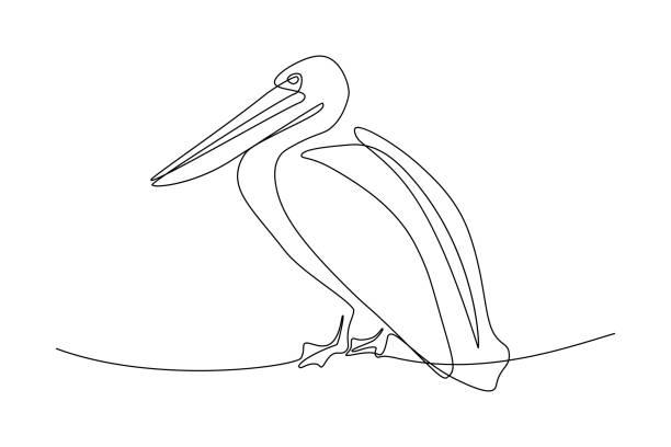 pelikanvogel - einzelnes tier stock-grafiken, -clipart, -cartoons und -symbole