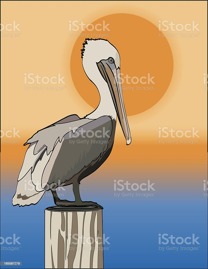 Pelican in the Setting Sun vector art illustration