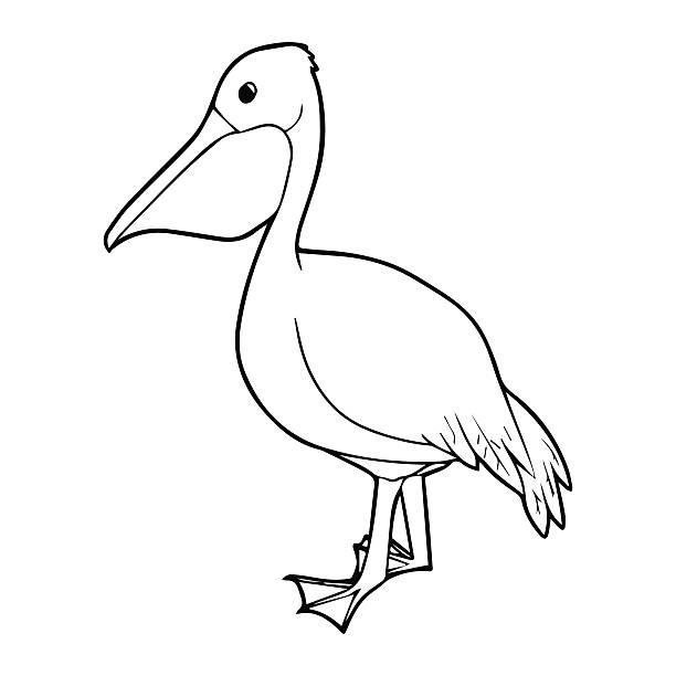 black pelican pictures clip art vector images illustrations istock
