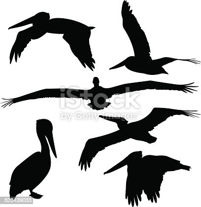 Vector illustration of a set of silhouettes of pelicans.