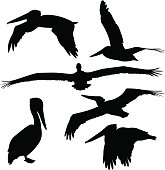 Pelican Silhouettes