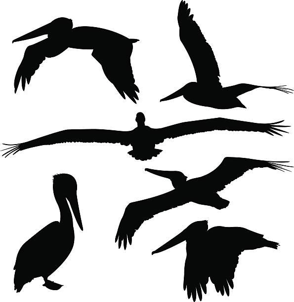 Flight Brown Pelican Clip Art - Feather - Free Bird Vector Transparent PNG