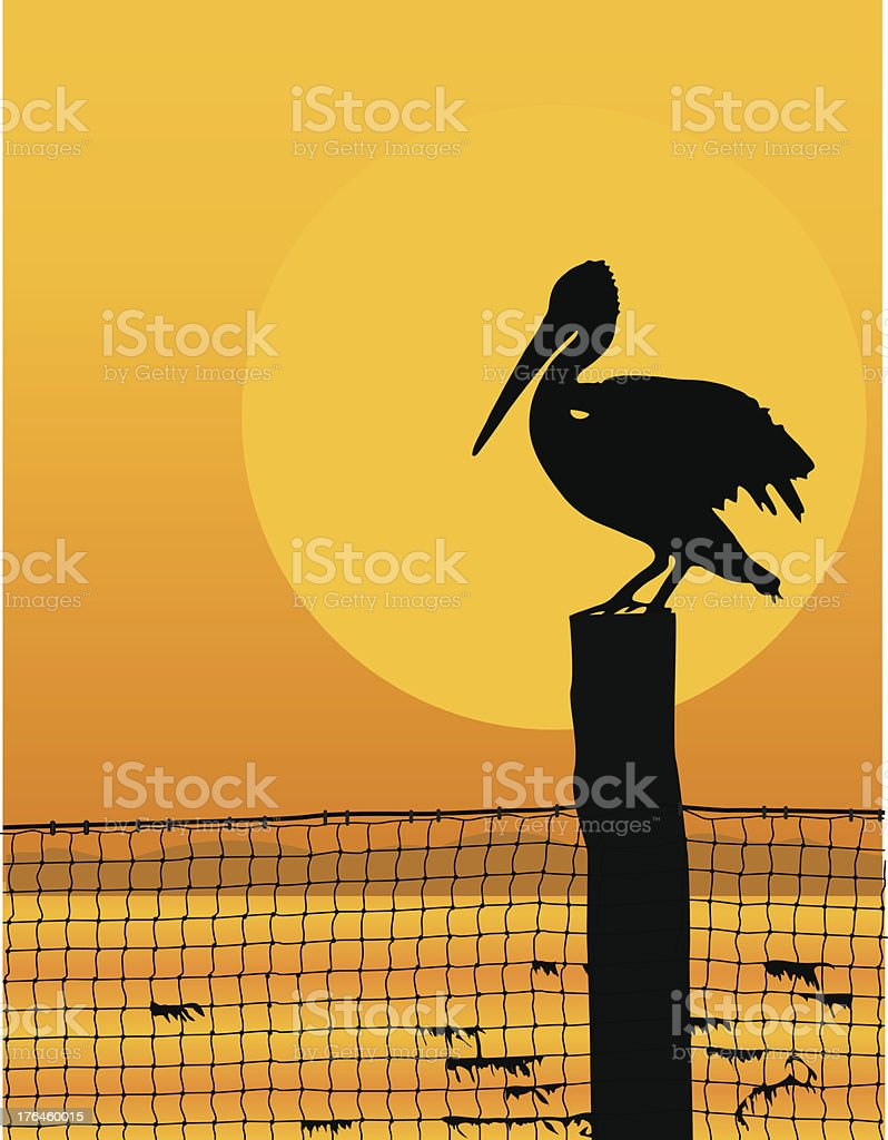 Pelican Sunset vector art illustration