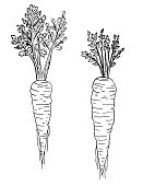 istock Pen And Ink Hand Drawn Carrot 1264486939