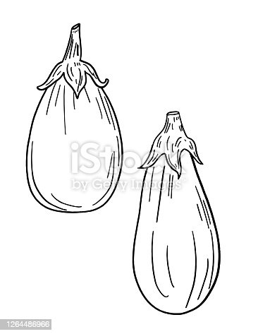 istock Pen And Ink Hand Drawn Eggplant 1264486966