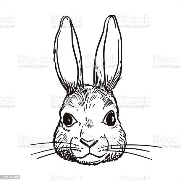 Pen and ink rabbit head sketch vector id678702550?b=1&k=6&m=678702550&s=612x612&h=cr82 ej31obbd qp ixfk2j510cq8hbii8e06n8h u8=
