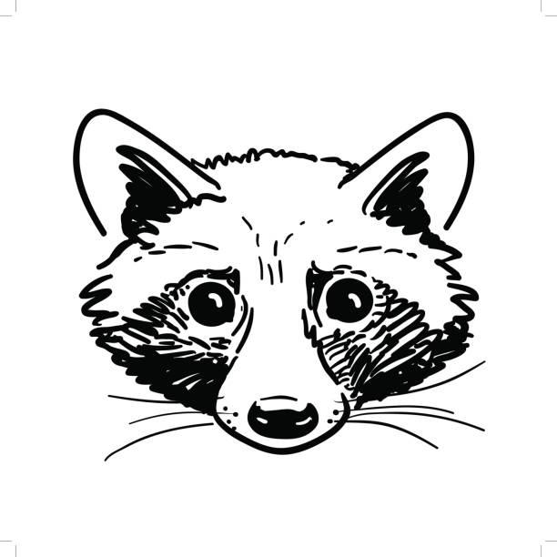 pen and ink raccoon head sketch - raccoon stock illustrations