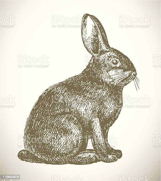 Pen and ink sketch of rabbit on white background vector id119850829?b=1&k=6&m=119850829&s=612x612&h=m mfgbrkjhlevppna6iu rfxax3ceo6udlcrtrccruy=