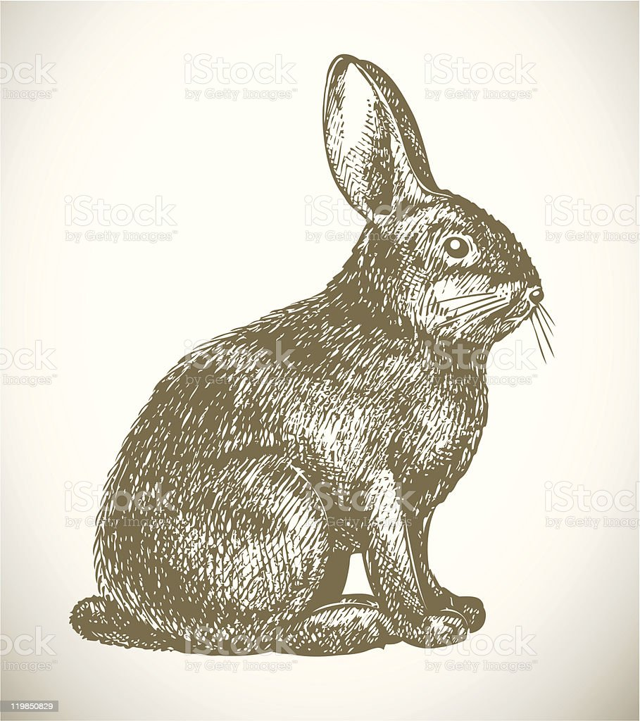 Pen and ink sketch of rabbit on white background vector art illustration