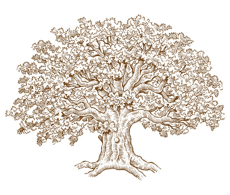 Pen and ink tree illustration