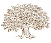 A pen and ink style drawing of a big old oak tree, just one single shape so easy to change the colour.