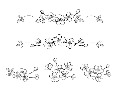 Pen drawing illustration of cherry blossoms set.