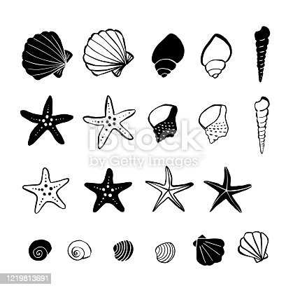Pen drawing illustration shellfish and starfish