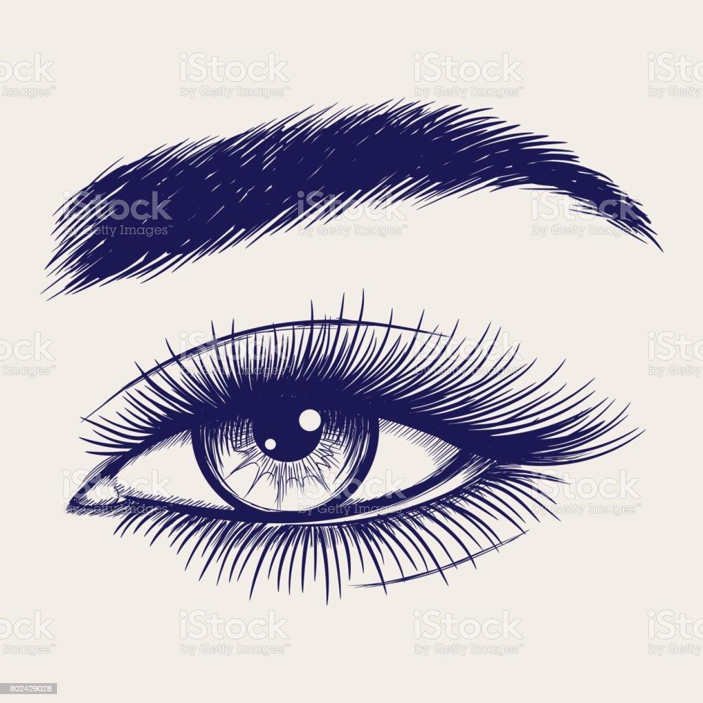 Pen Sketch Of Beautiful Female Eye Stock Illustration