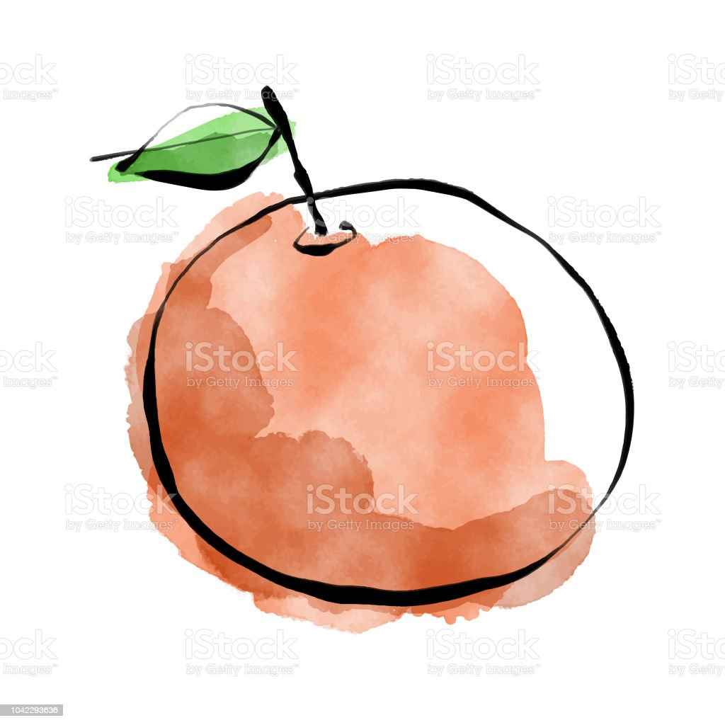 Pencil drawing and watercolor paints orange fruit stock illustration
