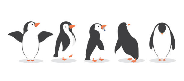 penguin characters in different poses set - penguin stock illustrations