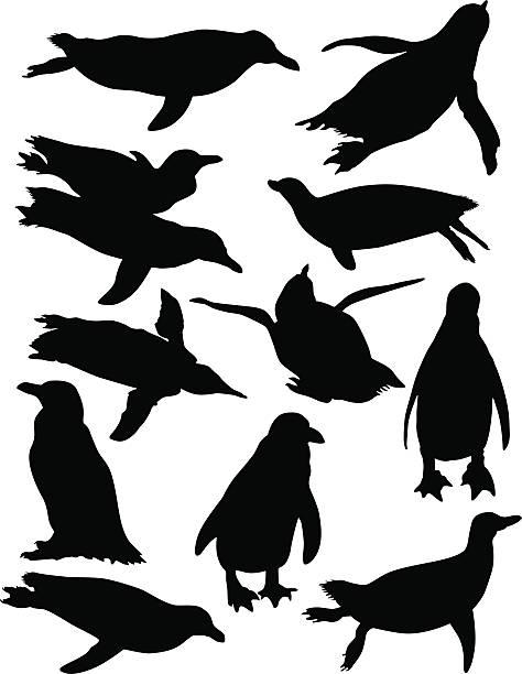 stockillustraties, clipart, cartoons en iconen met penguin collection - pinguins swimming