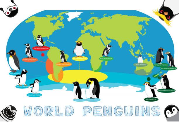 Penguin Distribution World Map Cartoon Vector Animal Cartoon EPS10 File Format emperor penguin stock illustrations