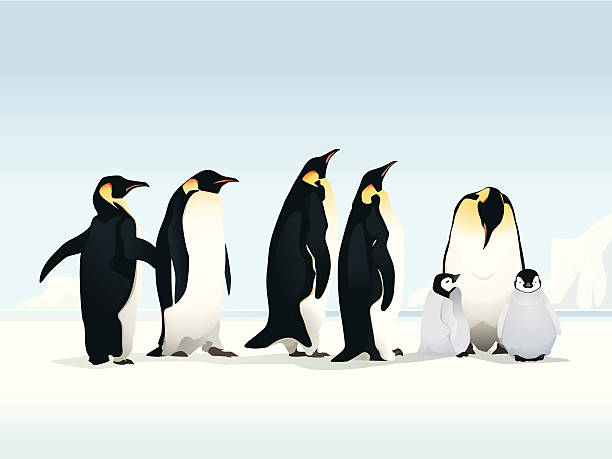 penguins on ice - penguin stock illustrations