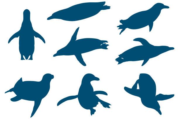 stockillustraties, clipart, cartoons en iconen met pinguïns - pinguins swimming