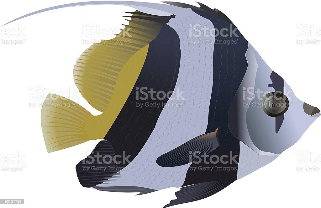 Pennant coralfish royalty-free stock vector art