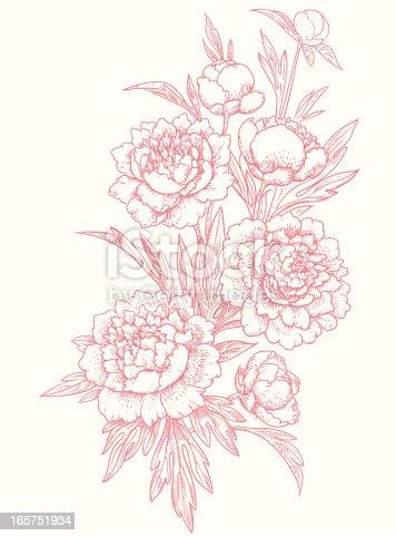 istock Peonies, clip art. 165751934