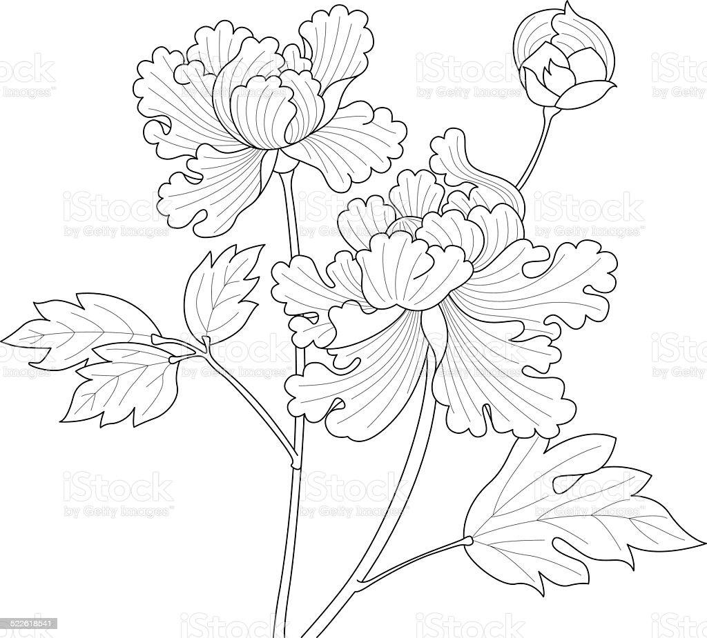 fleurs de pivoine dessin cliparts vectoriels et plus d 39 images de arbre en fleurs 522618541. Black Bedroom Furniture Sets. Home Design Ideas