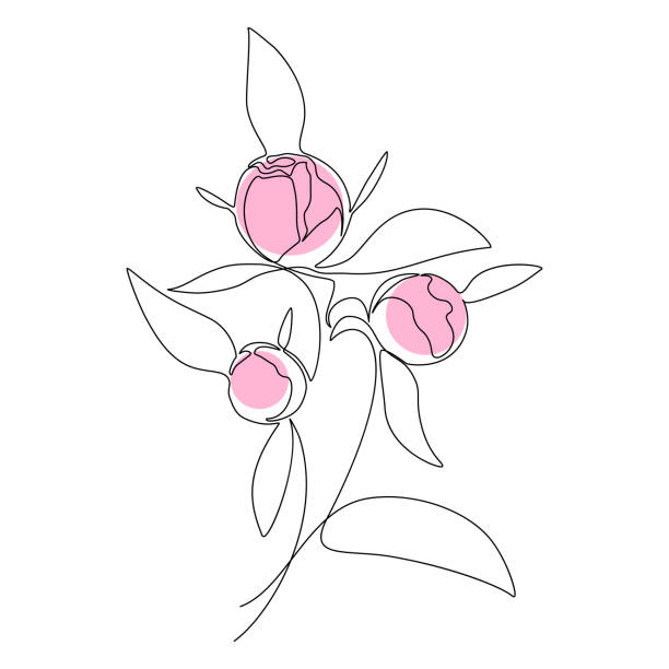 Peony bouquet Bouquet of peony buds in one line art drawing style. Vector illustration flower part stock illustrations