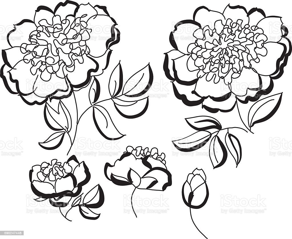 Peony Floral Sketch Spring Flower Vector Illustration Black An Royalty Free Stock